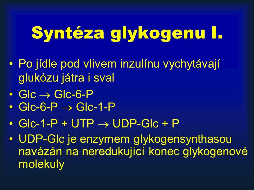 Syntéza glykogenu I. Po jídle pod vlivem inzulínu vychytávají glukózu játra i sval. Glc  Glc-6-P.