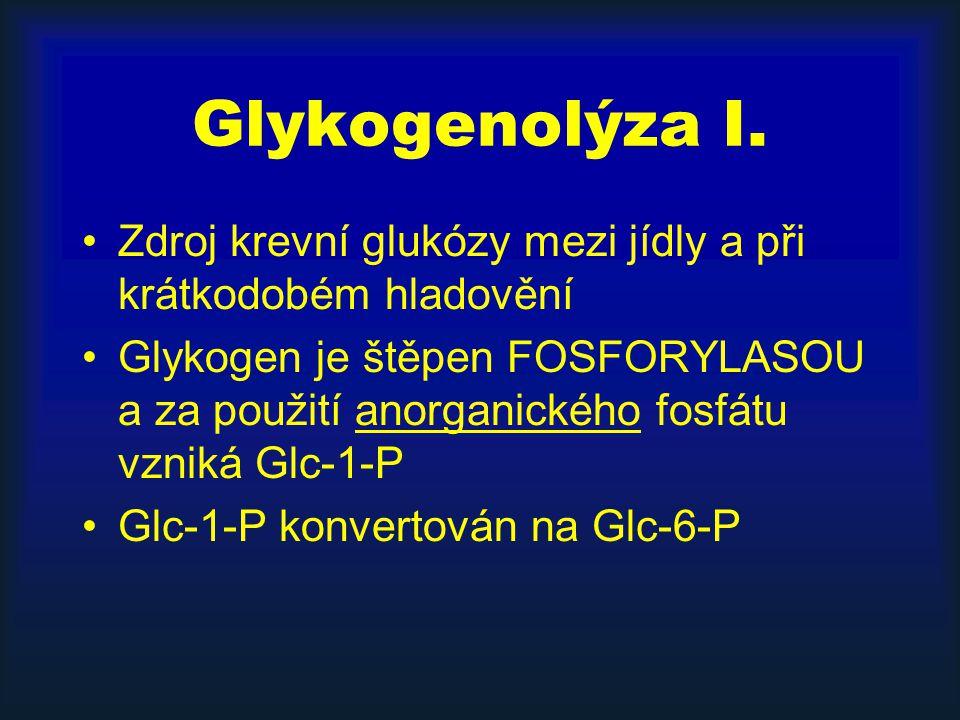 Glykogenolýza I. Zdroj krevní glukózy mezi jídly a při krátkodobém hladovění.