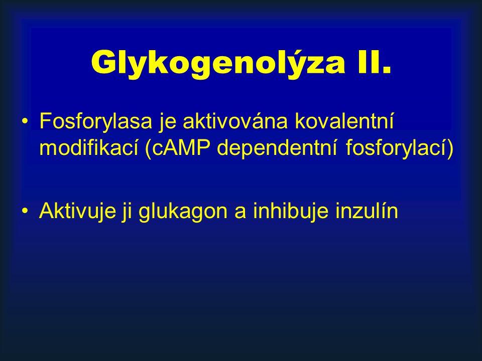 Glykogenolýza II.