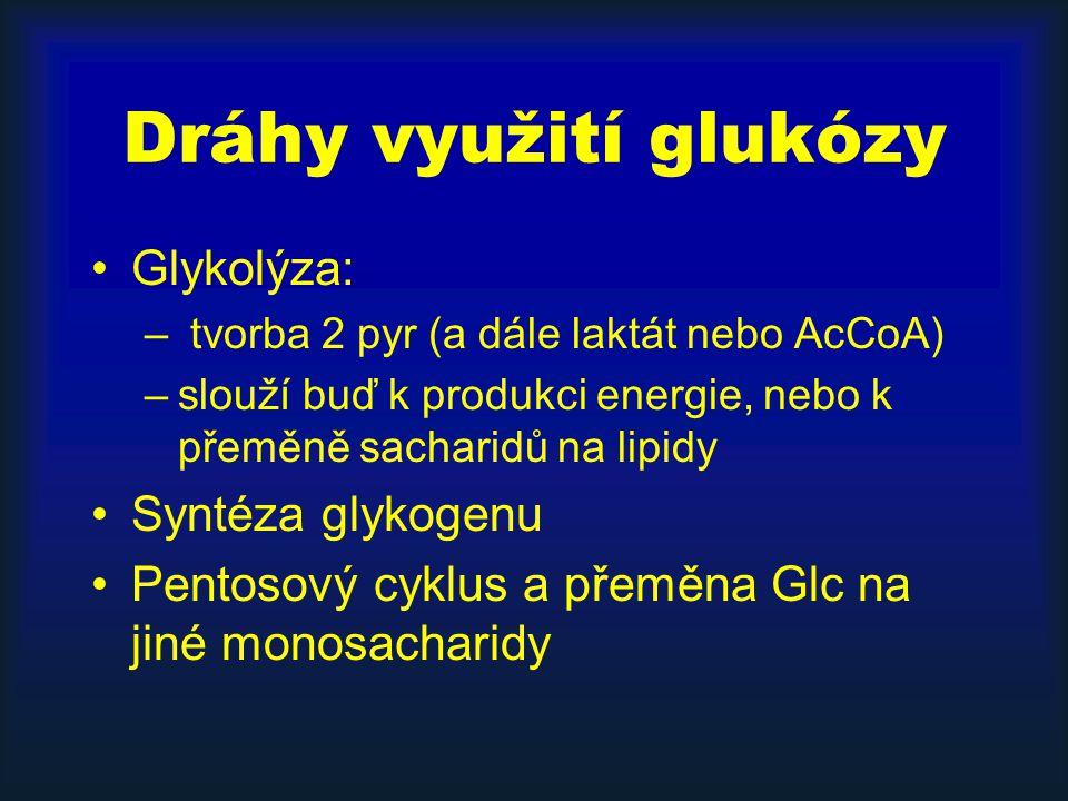 Dráhy využití glukózy Glykolýza: Syntéza glykogenu