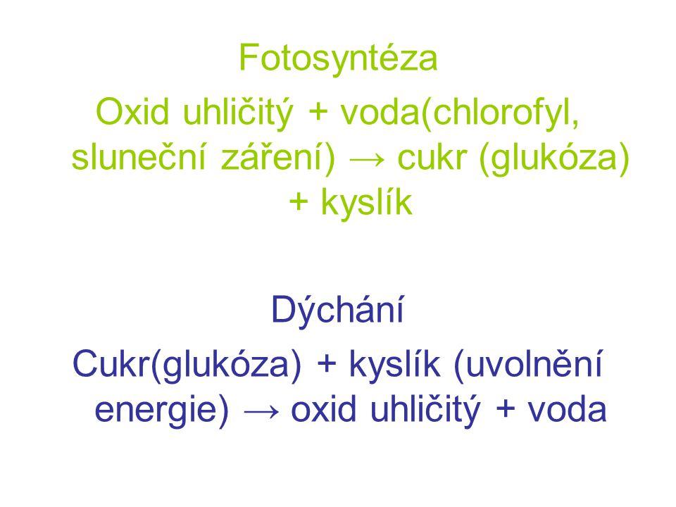 Cukr(glukóza) + kyslík (uvolnění energie) → oxid uhličitý + voda