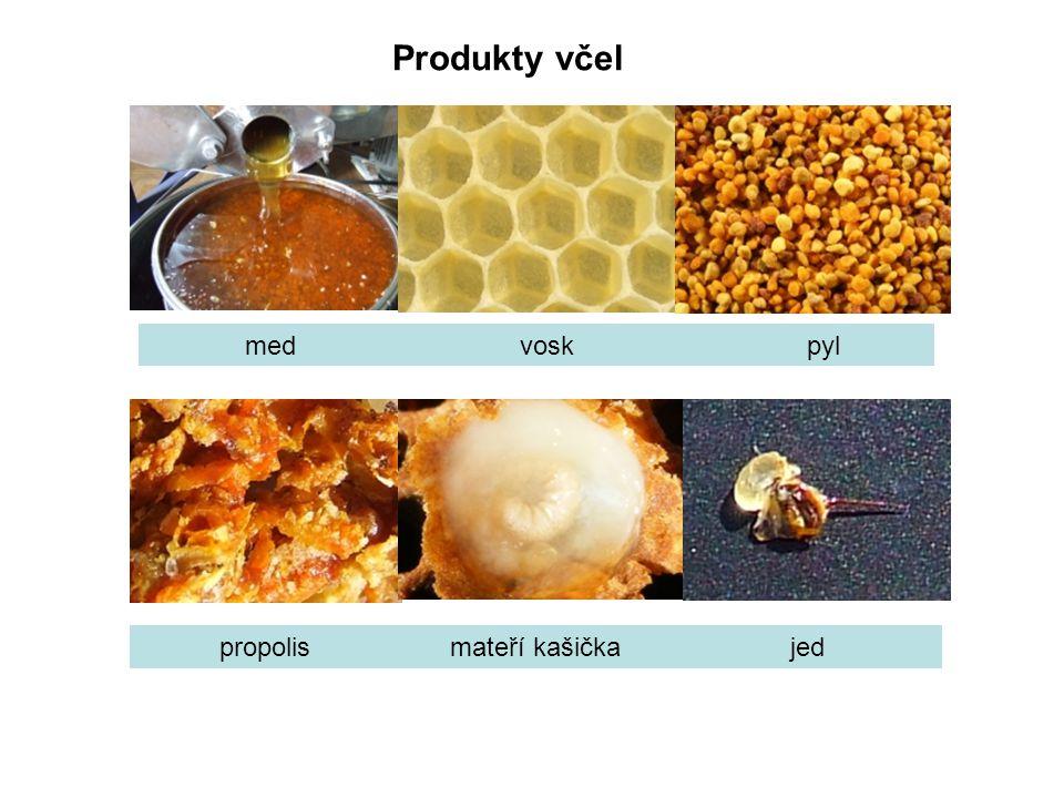 Produkty včel med vosk pyl propolis mateří kašička jed