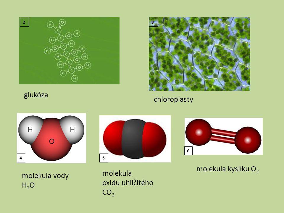glukóza chloroplasty molekula kyslíku O2 molekula molekula vody