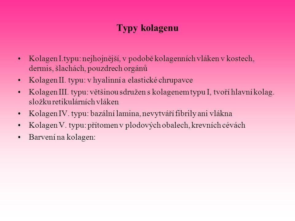 Typy kolagenu Kolagen I.typu: nejhojnější, v podobě kolagenních vláken v kostech, dermis, šlachách, pouzdrech orgánů.