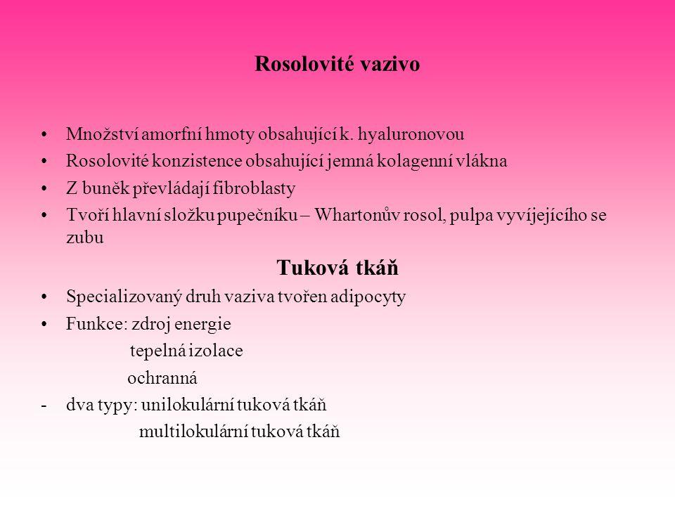 Rosolovité vazivo Tuková tkáň