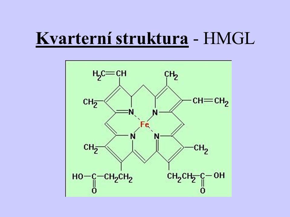 Kvarterní struktura - HMGL