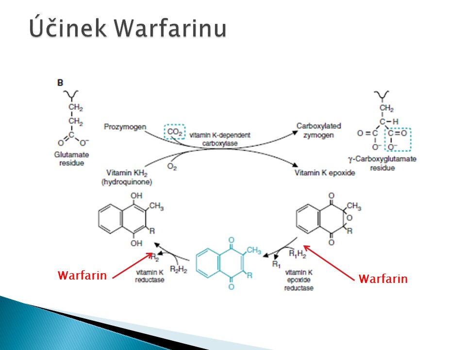 Účinek Warfarinu Warfarin Warfarin