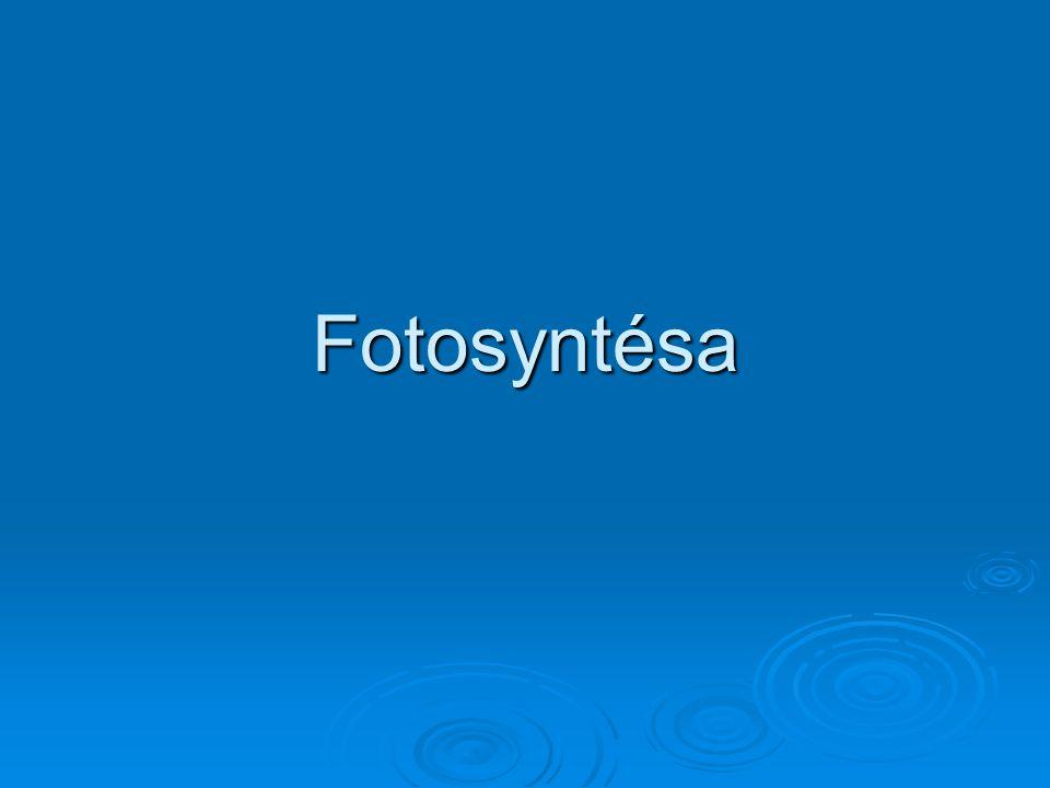 Fotosyntésa