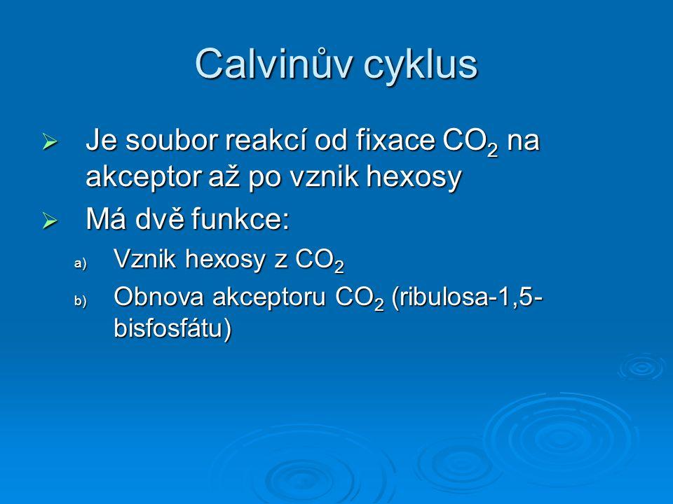 Calvinův cyklus Je soubor reakcí od fixace CO2 na akceptor až po vznik hexosy. Má dvě funkce: Vznik hexosy z CO2.