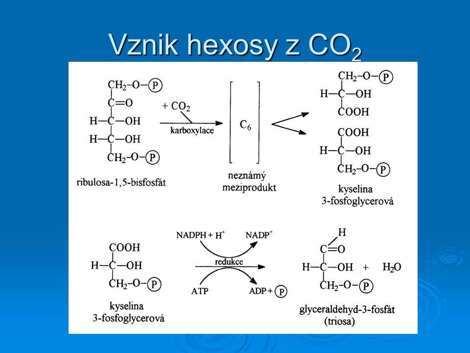 Vznik hexosy z CO2