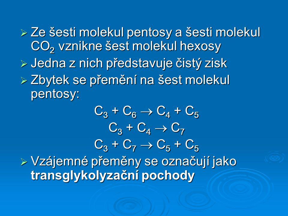 Ze šesti molekul pentosy a šesti molekul CO2 vznikne šest molekul hexosy