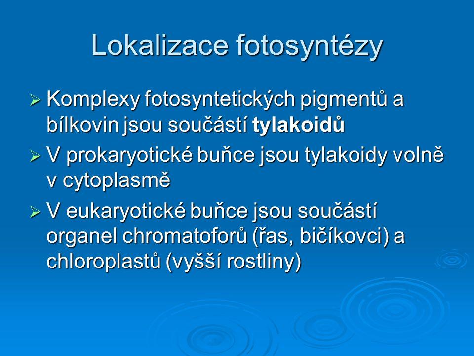 Lokalizace fotosyntézy