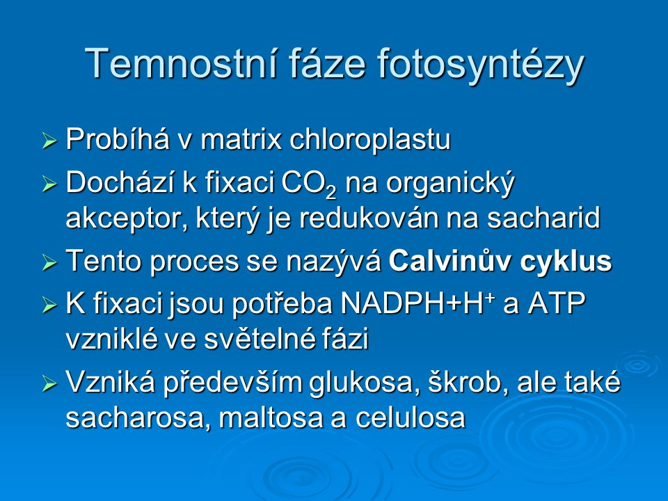 Temnostní fáze fotosyntézy