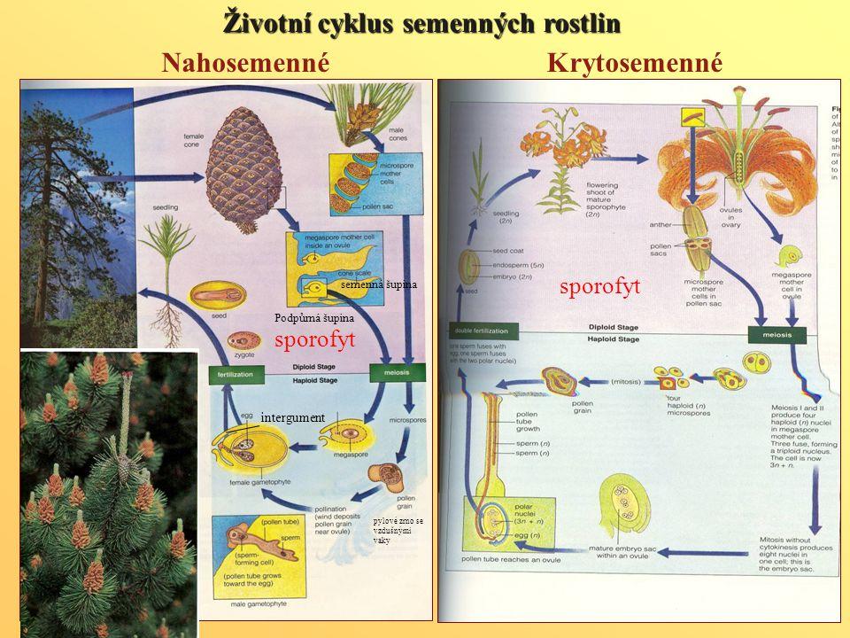 Životní cyklus semenných rostlin