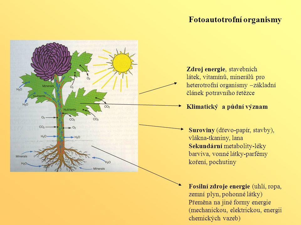 Fotoautotrofní organismy