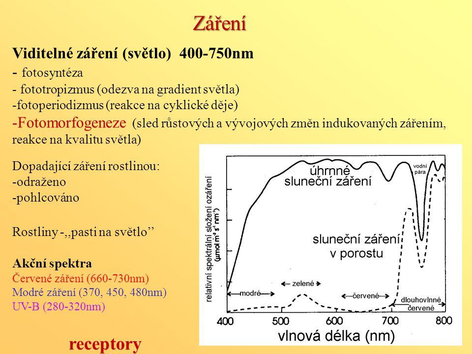 Záření receptory Viditelné záření (světlo) 400-750nm - fotosyntéza