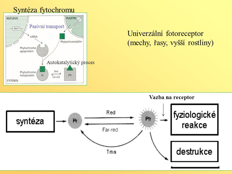 Univerzální fotoreceptor (mechy, řasy, vyšší rostliny)
