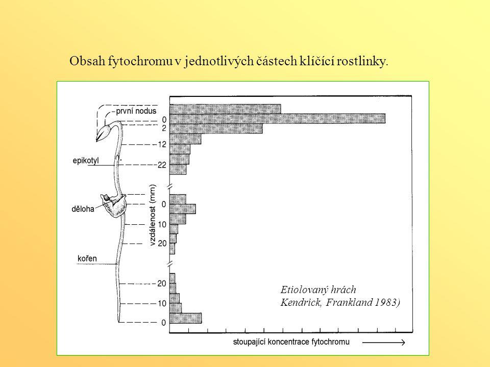 Obsah fytochromu v jednotlivých částech klíčící rostlinky.