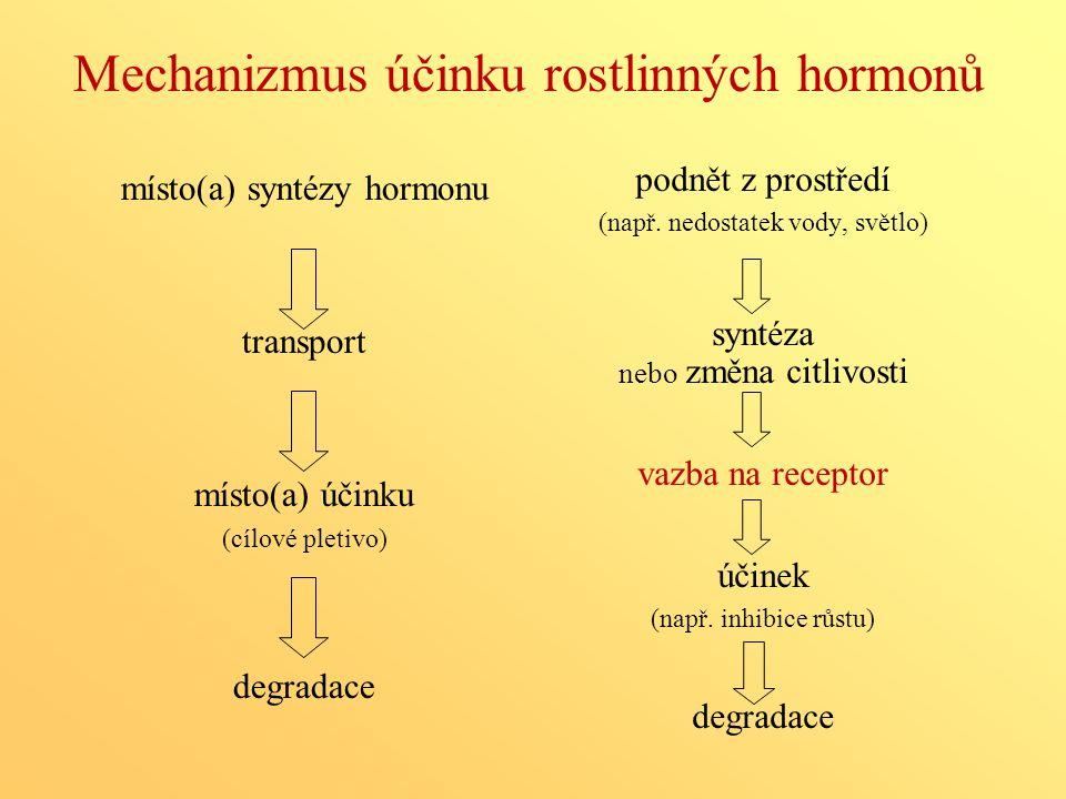 Mechanizmus účinku rostlinných hormonů