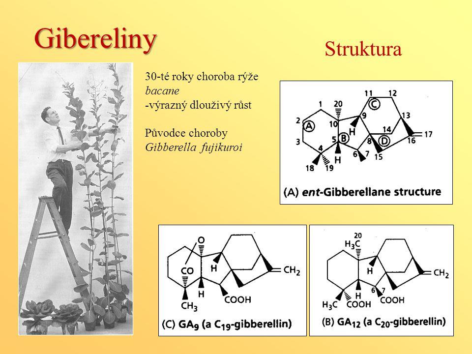 Gibereliny Struktura 30-té roky choroba rýže bacane