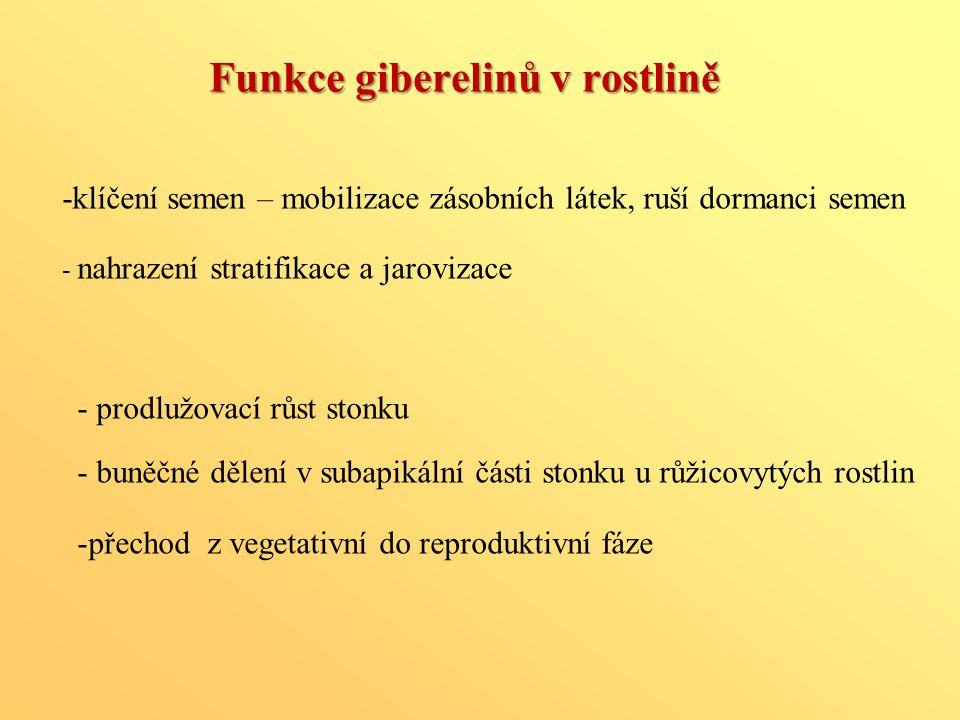 Funkce giberelinů v rostlině
