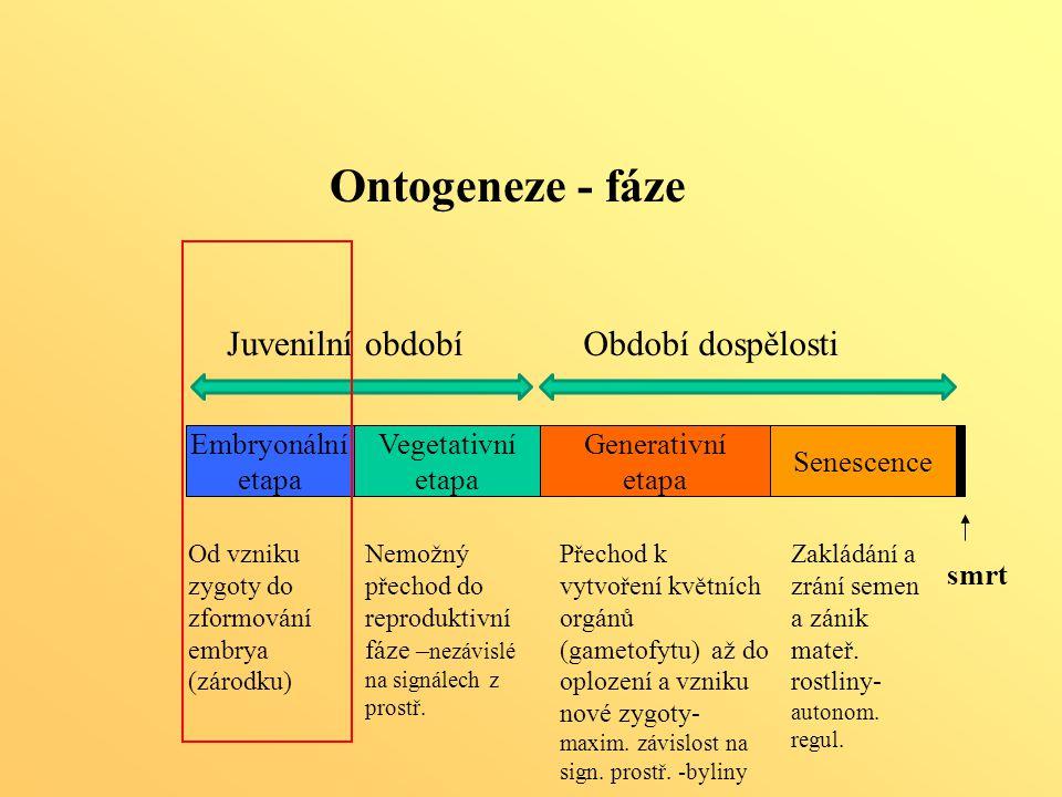 Ontogeneze - fáze Juvenilní období Období dospělosti Generativní etapa