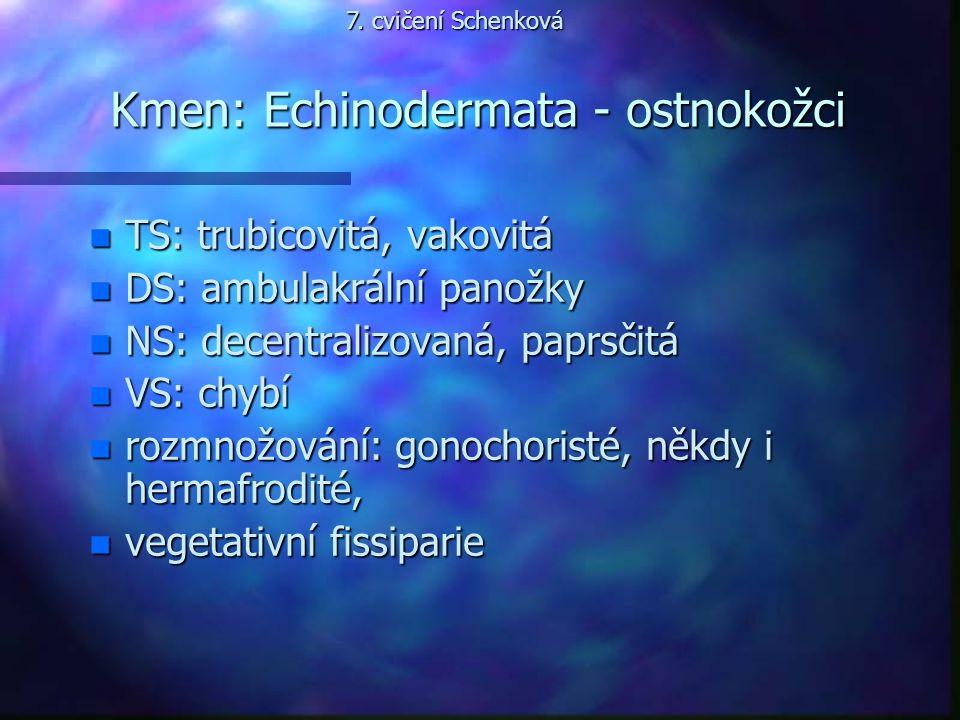 Kmen: Echinodermata - ostnokožci