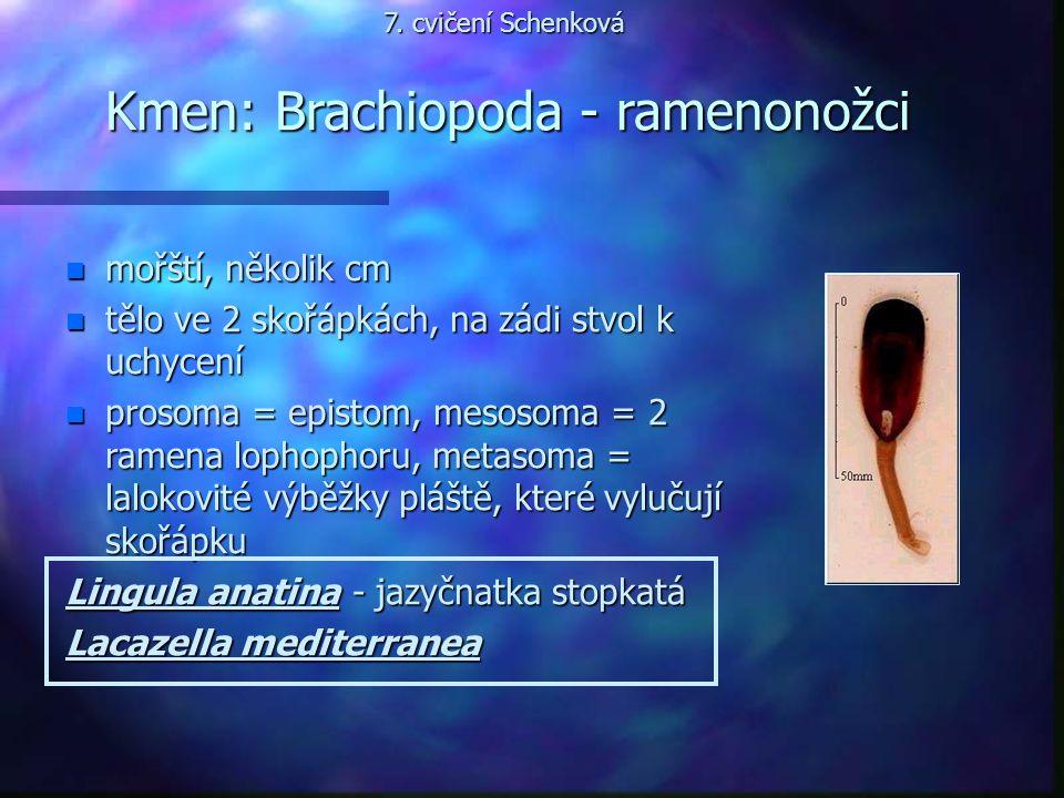 Kmen: Brachiopoda - ramenonožci