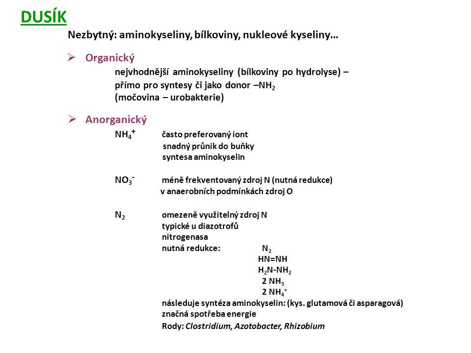 DUSÍK Nezbytný: aminokyseliny, bílkoviny, nukleové kyseliny… Organický