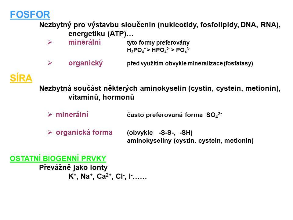 FOSFOR Nezbytný pro výstavbu sloučenin (nukleotidy, fosfolipidy, DNA, RNA), energetiku (ATP)… minerální tyto formy preferovány.
