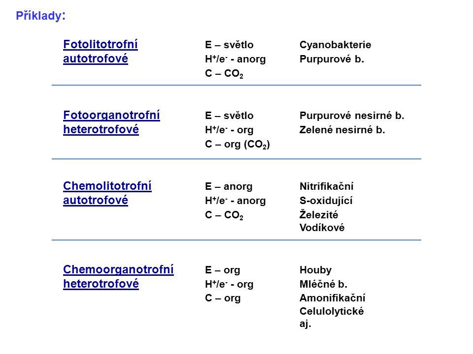 Fotolitotrofní E – světlo Cyanobakterie