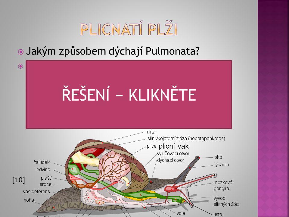 ŘEŠENÍ − KLIKNĚTE Plicnatí plži Jakým způsobem dýchají Pulmonata