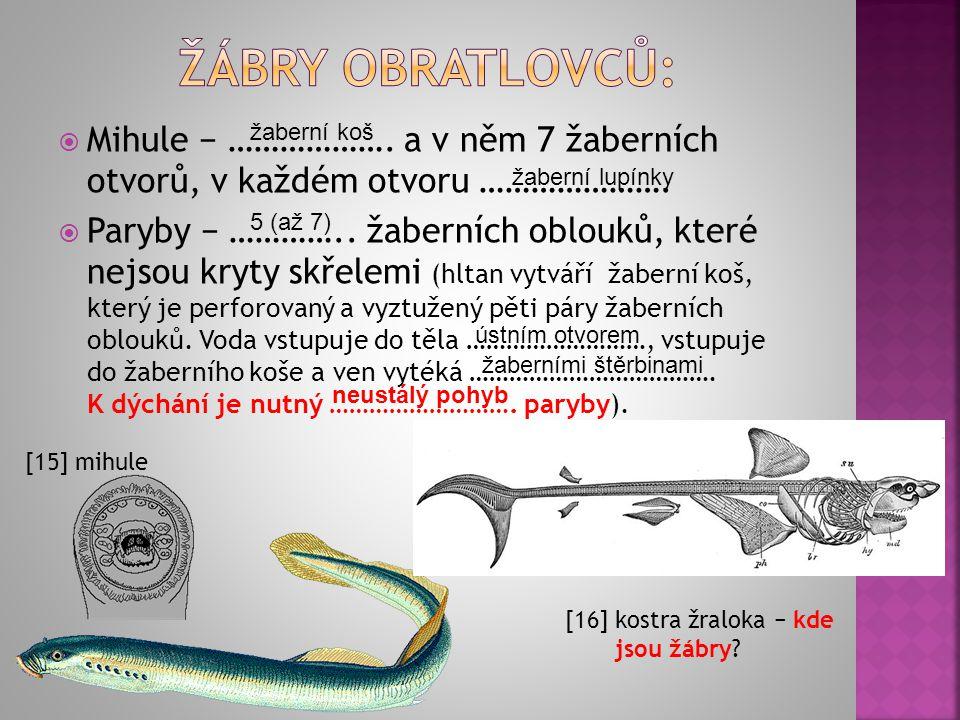 Žábry obratlovců: Mihule − ………………. a v něm 7 žaberních otvorů, v každém otvoru ………………….