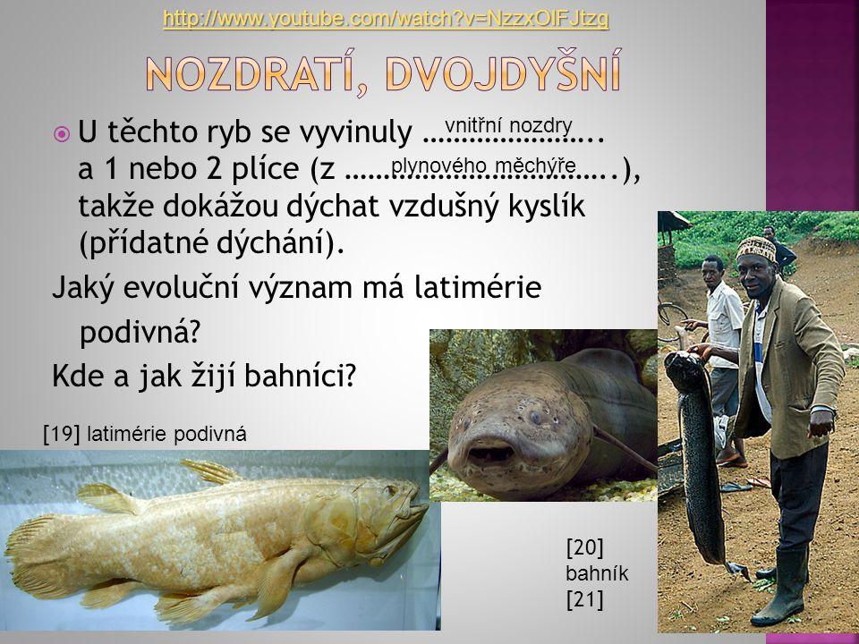 http://www.youtube.com/watch v=NzzxOlFJtzg Nozdratí, Dvojdyšní.