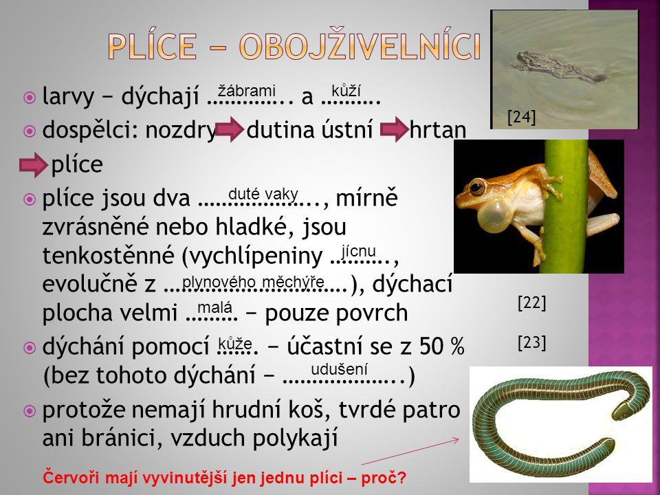 Plíce − obojživelníci larvy − dýchají ………….. a ……….
