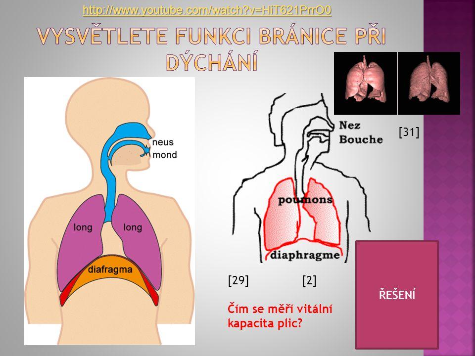 Vysvětlete funkci bránice při dýchání