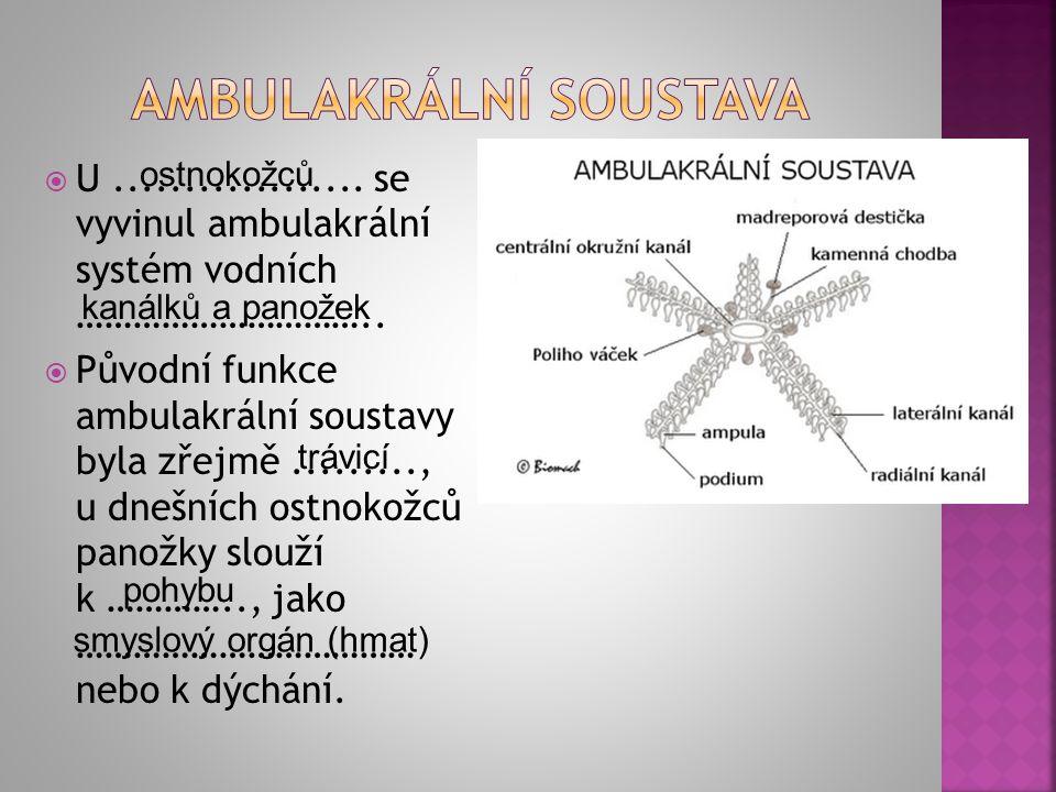 AMBULAKRÁLNÍ SOUSTAVA