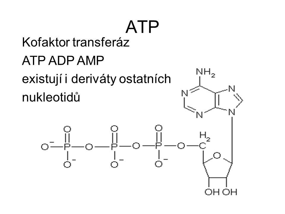 ATP Kofaktor transferáz ATP ADP AMP existují i deriváty ostatních