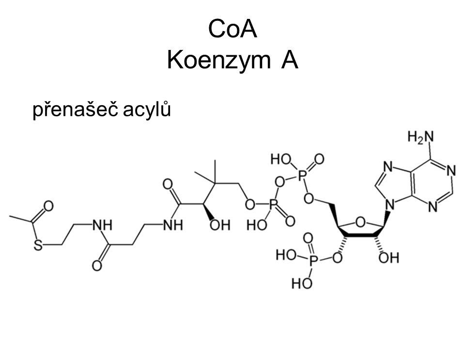 CoA Koenzym A přenašeč acylů