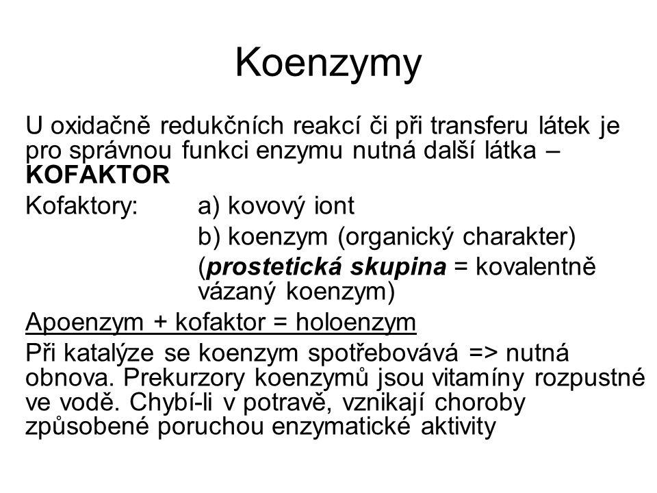 Koenzymy U oxidačně redukčních reakcí či při transferu látek je pro správnou funkci enzymu nutná další látka – KOFAKTOR.