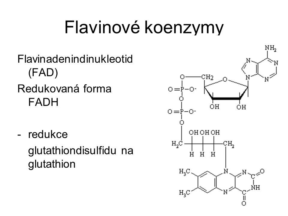 Flavinové koenzymy Flavinadenindinukleotid (FAD) Redukovaná forma FADH