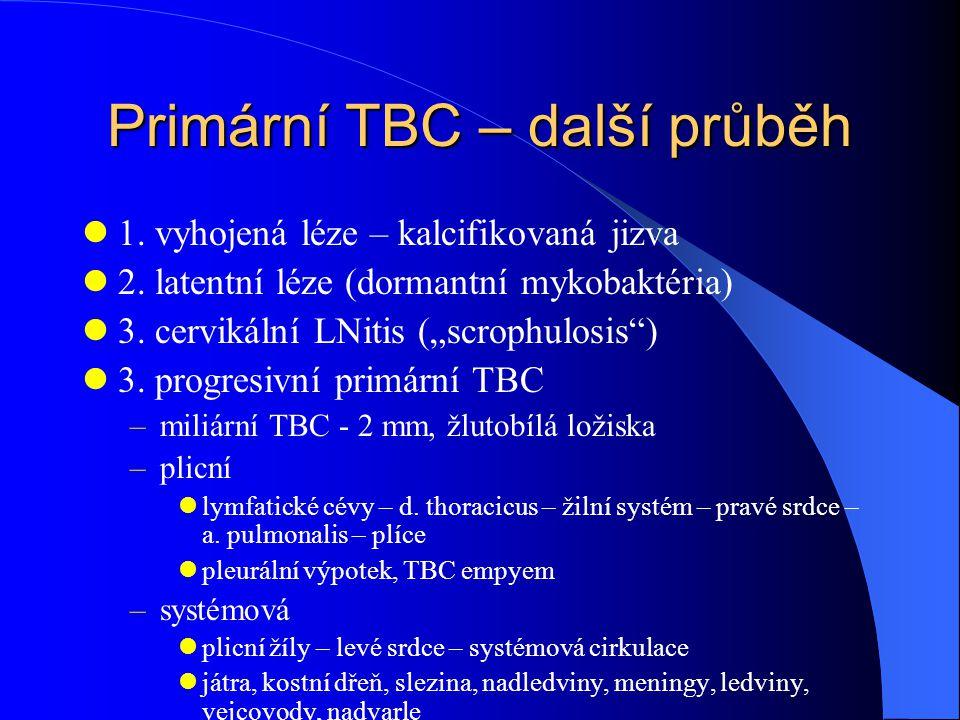 Primární TBC – další průběh