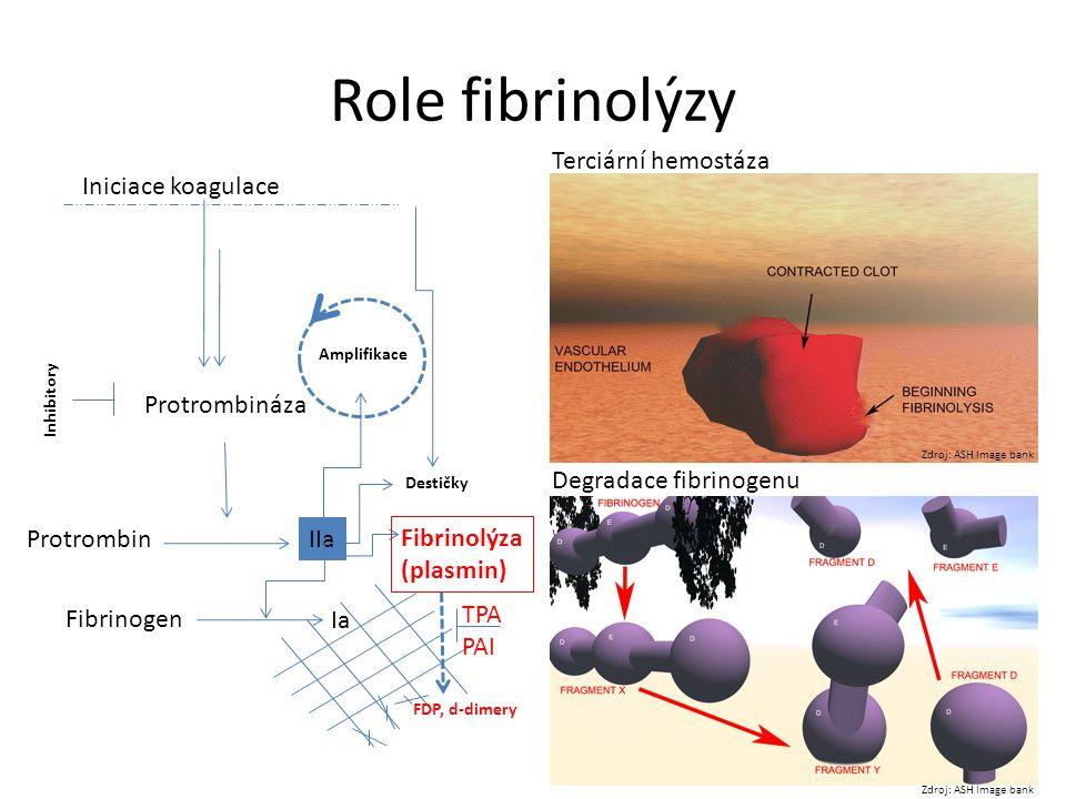 Role fibrinolýzy Terciární hemostáza Iniciace koagulace Protrombináza
