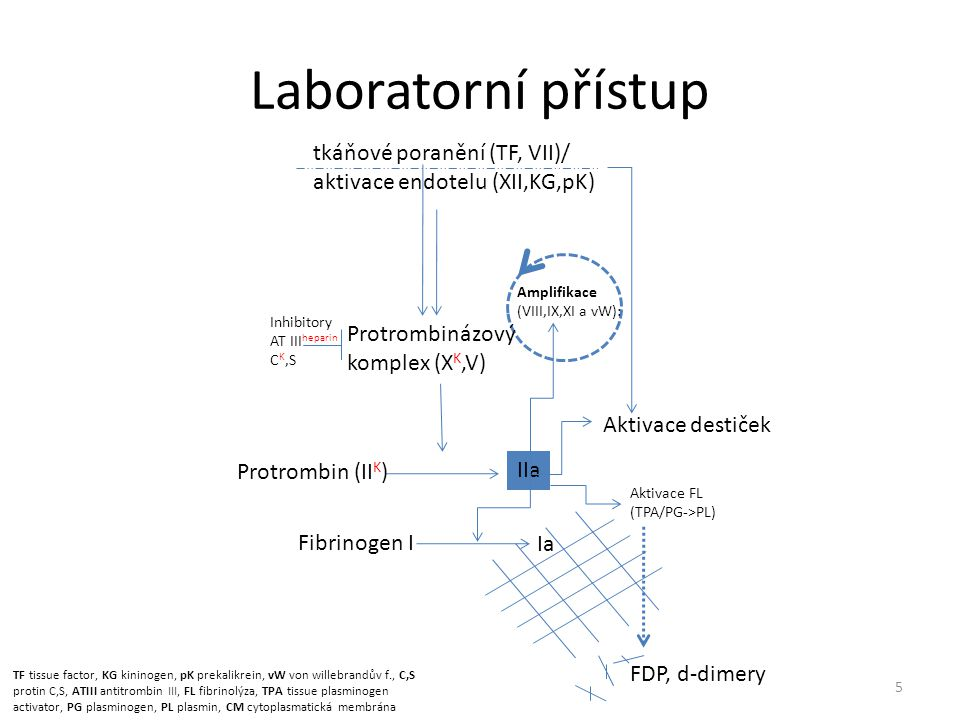 Laboratorní přístup tkáňové poranění (TF, VII)/