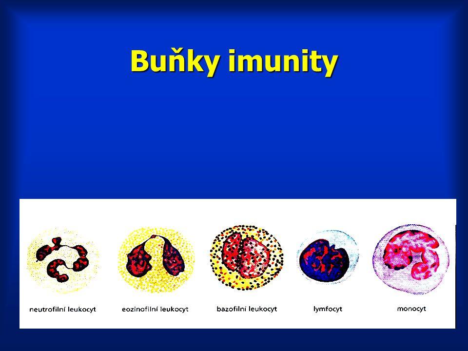 Buňky imunity