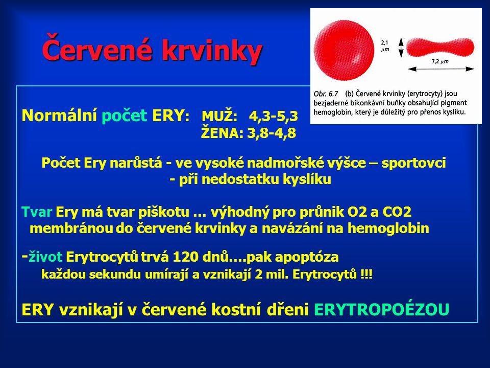 Červené krvinky Normální počet ERY: MUŽ: 4,3-5,3