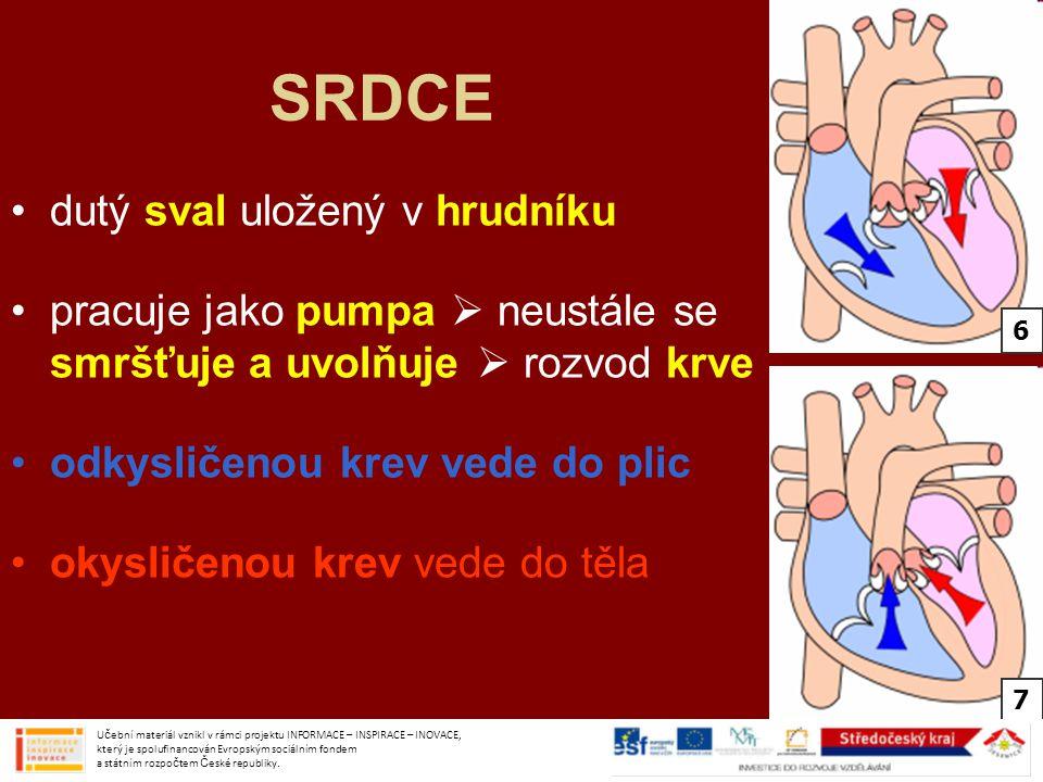 SRDCE dutý sval uložený v hrudníku