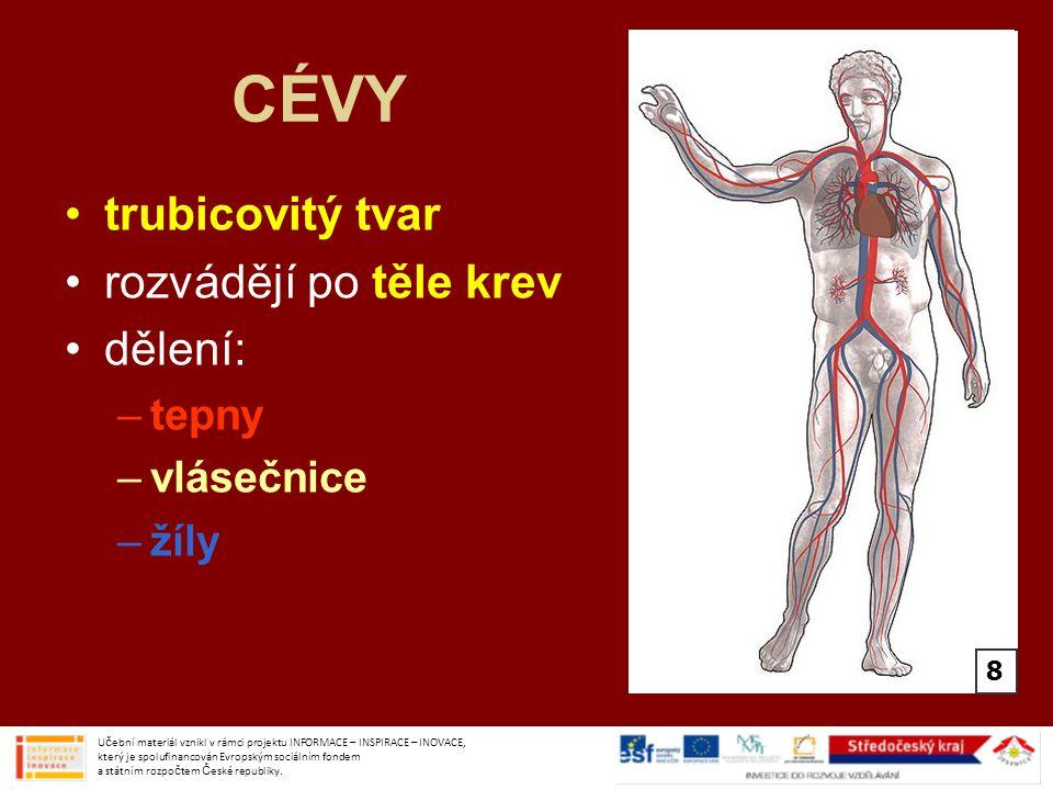 CÉVY trubicovitý tvar rozvádějí po těle krev dělení: tepny vlásečnice