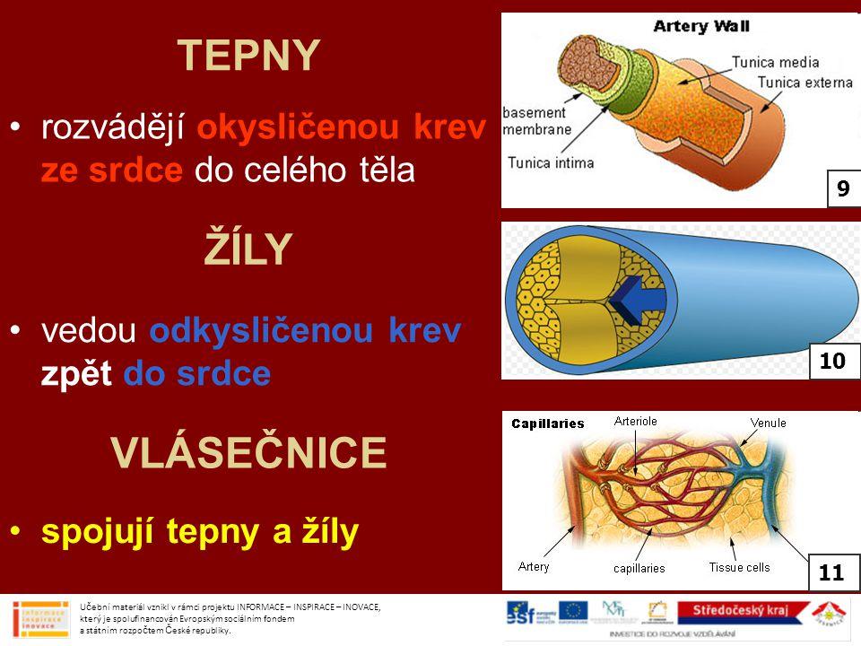 TEPNY rozvádějí okysličenou krev ze srdce do celého těla. 9. ŽÍLY. vedou odkysličenou krev zpět do srdce.