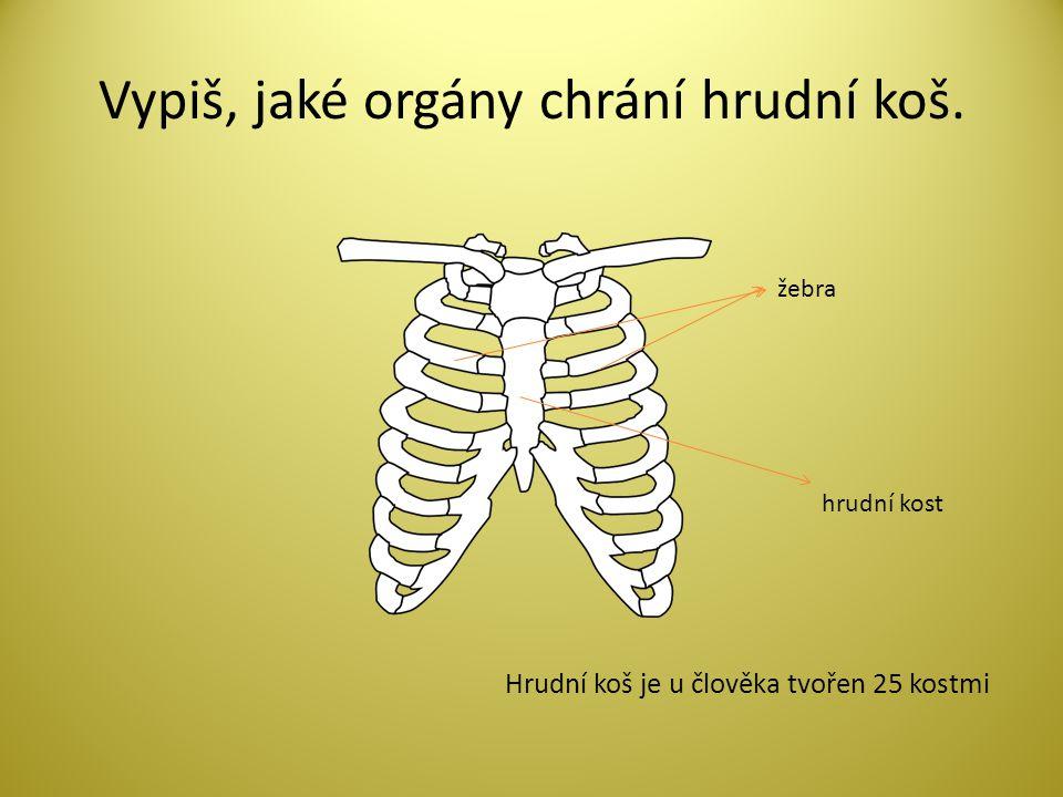 Vypiš, jaké orgány chrání hrudní koš.